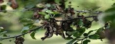 treemedicine3013006